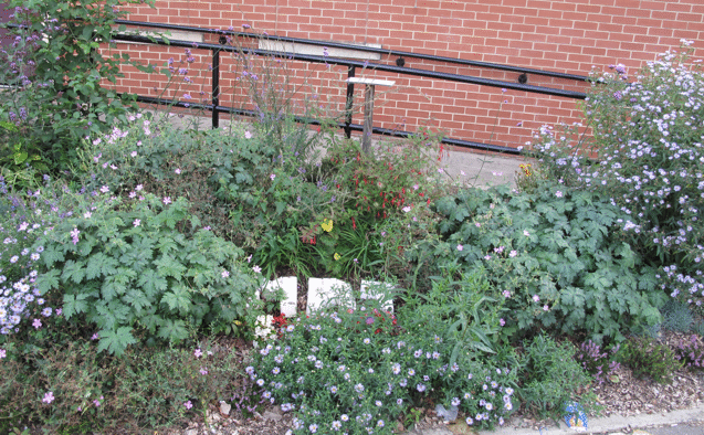 Planting outside the Engine House